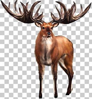 Irish Elk White-tailed Deer Big Buck Hunter PNG