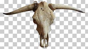 Cattle Goat Horn Bone PNG