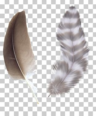 Bird Feather Color Asiatic Peafowl PNG