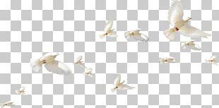 Rock Dove Homing Pigeon Bird Columbidae Flight PNG