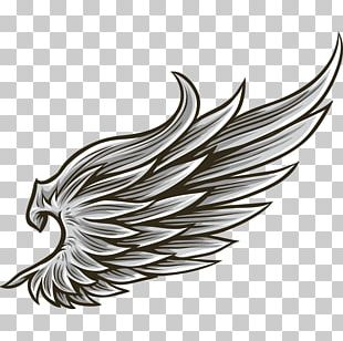 Drawing Angel Wing PNG