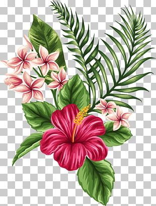 Flower Tropics Drawing PNG