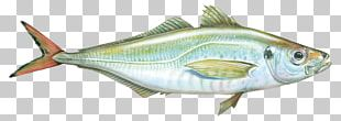 True Tunas Sardine Fish Products Bony Fishes Perch PNG