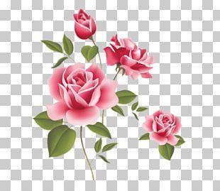 Rose Pink Desktop PNG