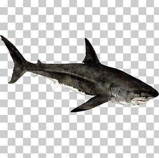 Zoo Tycoon 2 Requiem Shark Hammerhead Shark Lamnidae Great White Shark PNG