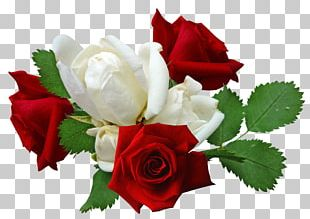 Rose Flower PNG