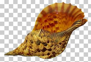 Seashell Conch Sand PNG