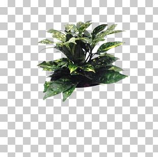 Flowerpot Leaf Houseplant Tree PNG