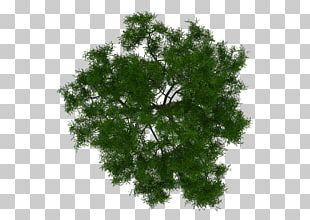 Tree Architecture Plant Project PNG