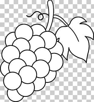 Common Grape Vine Coloring Book Grape Leaves Eggplant PNG