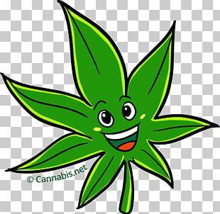 Kush Cannabis Sativa White Widow Cartoon PNG