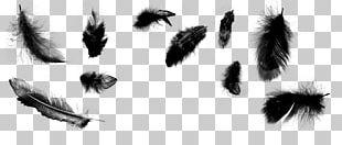Feather Brush Bird Illustrator PNG