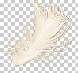 White Feather PNG