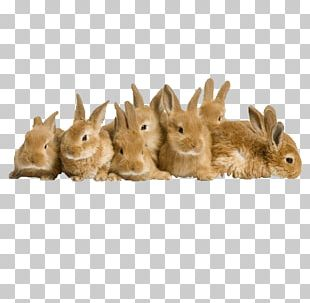 Easter Bunny Rabbit High-definition Television PNG