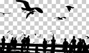 Bird Gulls Silhouette Sky Sunset PNG