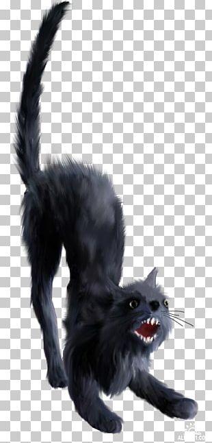 Black Cat Kitten Bombay Cat Whiskers Nebelung PNG