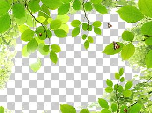 Butterfly Green Leaf PNG