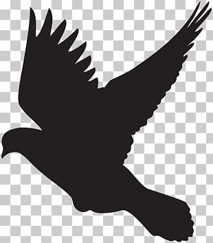 Columbidae Bird Flight Silhouette PNG