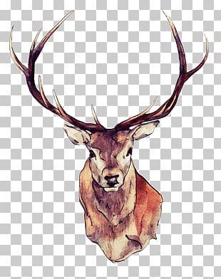 Red Deer Moose White-tailed Deer Elk PNG