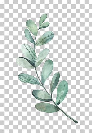 Watercolor Painting Leaf Illustration PNG