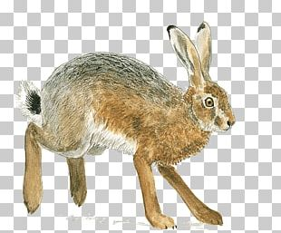 Domestic Rabbit European Hare Rodent Brown Rat European Rabbit PNG