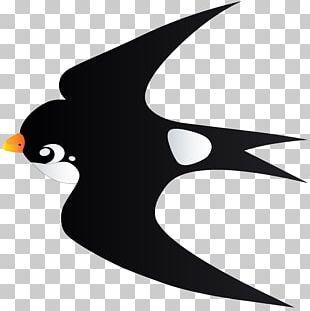 Bird Penguin PNG