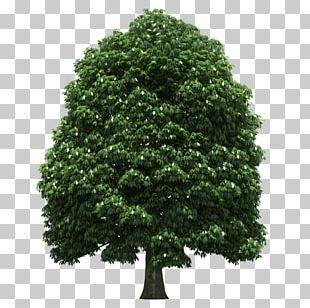 Tree Trunk Shrub Leaf PNG
