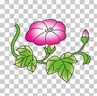 Flower Adobe Illustrator Ipomoea Nil Information PNG