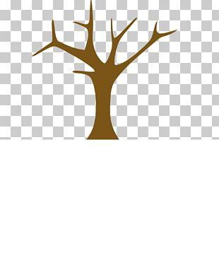 Branch Tree Trunk Arecaceae Shrub PNG