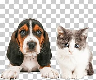 Cat People And Dog People Cat People And Dog People Pet Sitting Puppy PNG