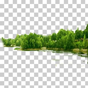 Tree Forest PNG