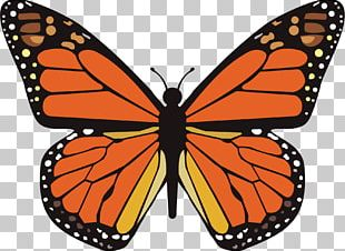 Monarch Butterfly Animal Migration Viceroy Insect Wing PNG