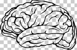 Human Brain Cognitive Training Neuron PNG