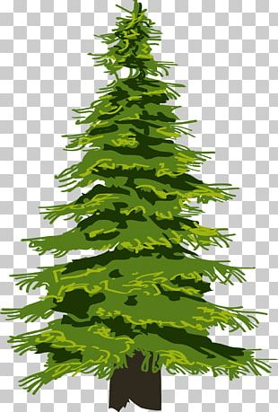 Evergreen Tree Pine Drawing Fir PNG