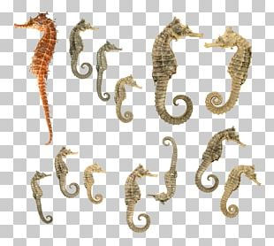 Tiger Tail Seahorse PNG