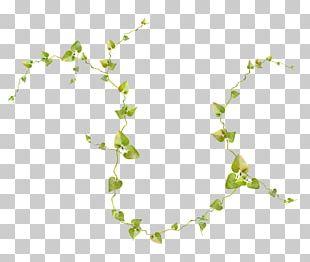 Vine Plant Tree Honeysuckle Drawing PNG