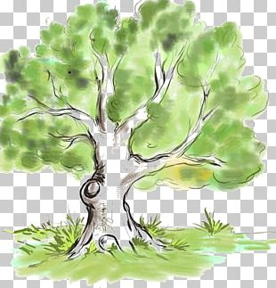 Drawing Family Tree Genealogy Branch PNG