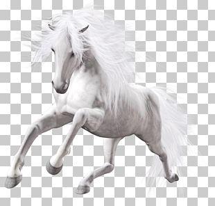 Horse White Stallion PNG