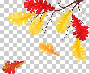 Autumn Leaves Golden Autumn Leaf Child PNG