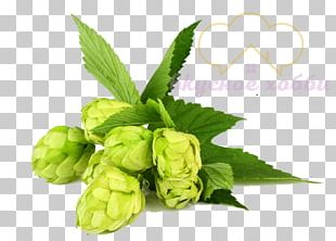 Beer Brewing Grains & Malts Beer Brewing Grains & Malts Hops Whiskey PNG