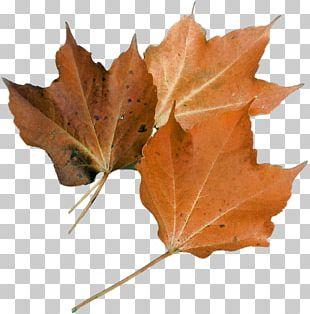 Autumn Flyer Harvest Festival Poster Maple Leaf PNG