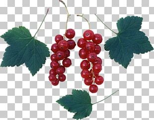 Common Grape Vine Zante Currant Redcurrant Grape Leaves PNG