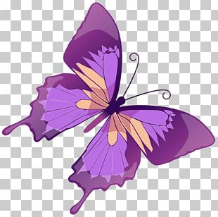 Butterfly Purple Free Content Color PNG