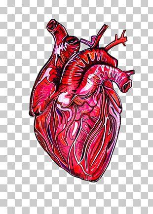 American Heart Association Human Anatomy Drawing PNG