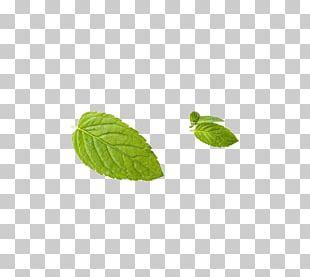Leaf Peppermint Green PNG