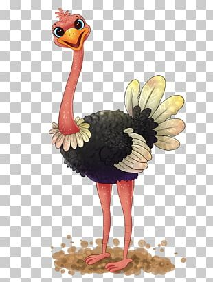 Common Ostrich Free Content PNG