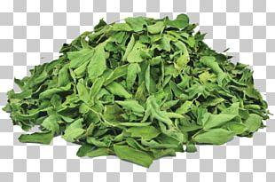 Biofach Germany Organic Food Vegetarian Cuisine Herb Leaf Vegetable PNG