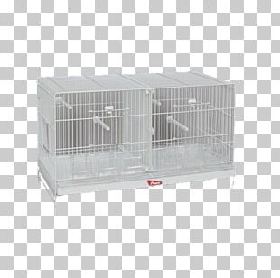 Cage Domestic Canary Bird Budgerigar Pet PNG