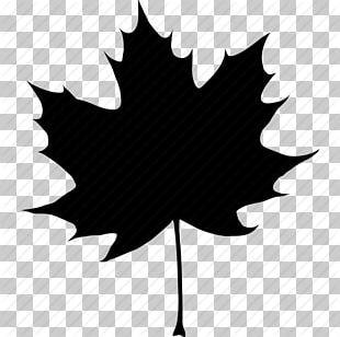 Canada Acer Nigrum Maple Leaf Computer Icons Autumn PNG