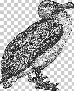 Owl Bird Albatross Beak Feather PNG